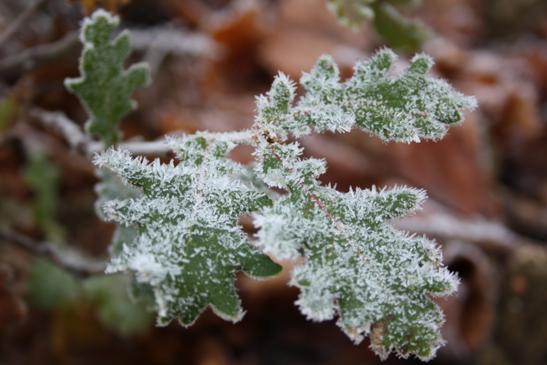 decembre 2010 171 vigne hiver