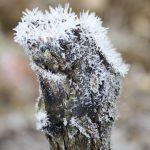 decembre 2010 175 vigne hiver