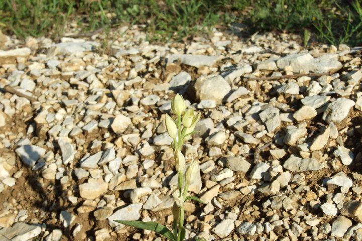 mai_2010_1 biodiversité