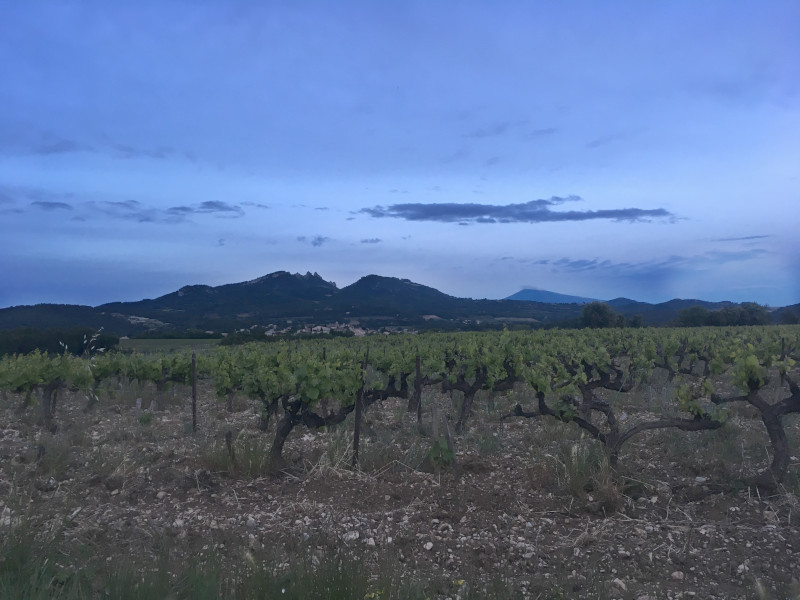 Vacqueyras vineyard