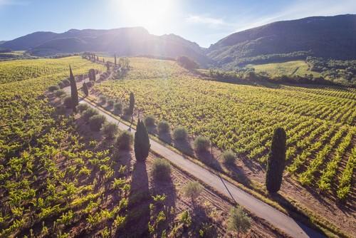 Balade culturelle au sein du vignoble et dégustation